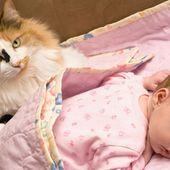 Un chat a sauvé la vie d'un nourrisson abandonné près d'un vide-ordures: L'animal a réchauffé le...