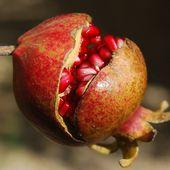Les fruits et légumes de Novembre - Aliments-santé