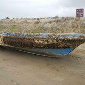 Le tsunami de 2011 a transporté des animaux marins du Japon jusqu'en Amérique - Sciencesetavenir.fr