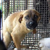 Sign the Petition to Stop Korea's Cruel Dog Meat Trade!