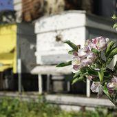 La ruche Cercure parrainée par des particuliers
