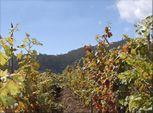 Vinhos Barbeito - Madeira Wine