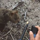 French tourists who torched Rottnest Island quokka fined $4000 each