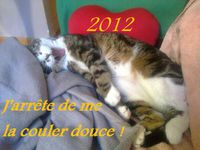 ma bestiole, mon chat d'amour