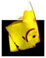 -------- Jaydee photo ---------- Les tofographies de Jaydee ---