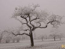 Radiographie d'un arbre