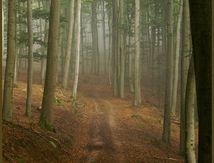diaporama, la forêt enchantée