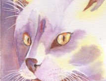 Chat blanc à l'aquarelle