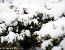 Le buisson et la neige