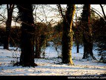 Lumière d'hiver sur le parc