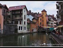 Les cygnes du Viel Annecy ...