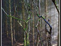 Ambiance féerique dans un sous bois (2/2) ...
