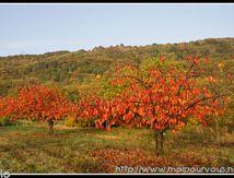 L'automne flamboyant ...