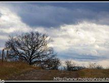 Arbre sur ciel trés nuageux ...