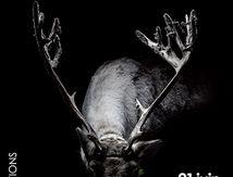 9e édition des PROMENADES PHOTOGRAPHIQUES 21 juin - 15 septembre 2013 / Vendôme