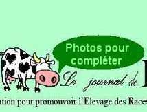 N°61: Les photos...