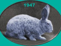 Astrex: un lapin qui frise !