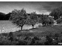 Paysages de Haute-Provence