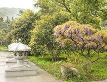 Chine: Lorsque l'Art et la Nature se donnent rendez-vous