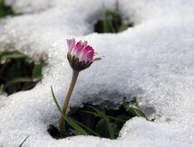 Le printemps vaincra !!