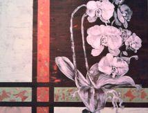 nouvelles orchidées