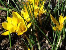Tapissier Du Siège au Décor, Arrivée du printemps ?