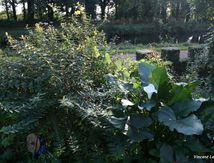 Sculpture verte au PK 195 aussi en ce début d'automne 2012...