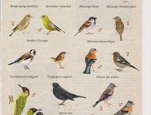 Rustica présente les oiseaux de nos jardins, ceux que l'on rencontre aussi au PK 195, au bord du canal de Nantes à Brest...