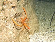 Plongée de nuit = rencontres garanties ! / Night diving = encounters guaranteed !