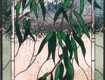 Weeping Eucalyptus b