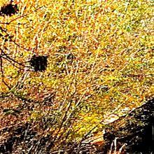 Le3 ème Festival du livre , les Feuillesd'automneva se dérouler les 23 et 30 octobre sous le thème de la Nature