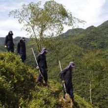 Combatting Cocaine Production in Bolivia, Colombia and Peru