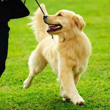 Tips To Make Dog Training Easier!