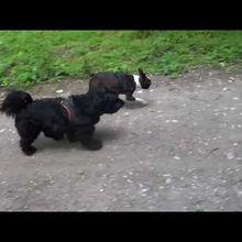 L'automne et mon chien ...