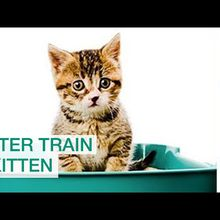 Why Does Your Cat Not Use Its Litter Box?