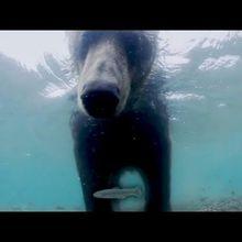 Cinémovida Albi exploite un ours