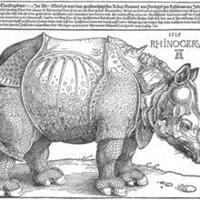 Qui est le plus fort? Le rhinocéros ou l'éléphant?