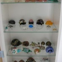 ma collection de tortues