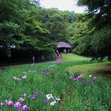 Le jardin des Iris au Gyoen de Meïji Jingu