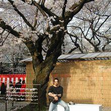 Sakura et Tsubaki