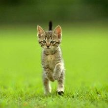 Chat debout (video)