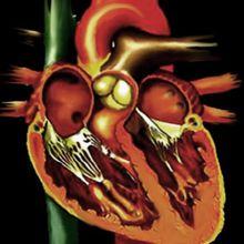 Cardiosophie