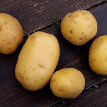 Saga gourmande : la pomme de terre