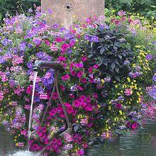 Alsace en fleurs