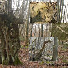 Etranges rencontres dans les bois.