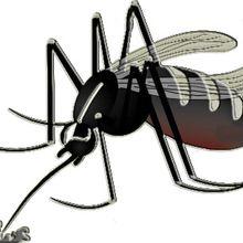 Compte rendu , réunion sur la surveillence du moustique tigre , Alpes de Haute Provence