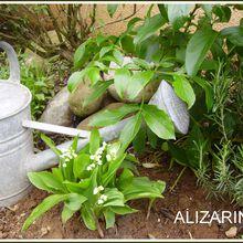 Du muguet au jardin...
