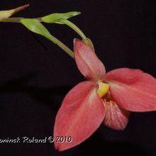 Orchidées en Rouge.
