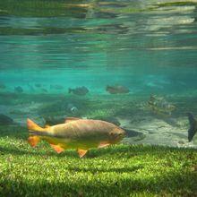 Rio da Prata, em Jardim, élu des meilleurs endroit de plongée en eau du pays