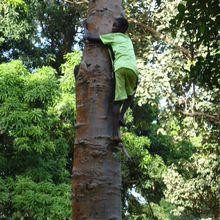 Environnement : Reboisement dans la réserve forestière de Koubanao
